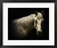 Framed Horse Portrait VI