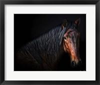 Framed Horse Portrait VII