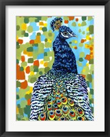 Plumed Peacock II Framed Print