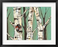 Birch Grove on Teal I Framed Print