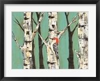 Birch Grove on Teal II Framed Print