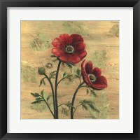 Framed Anemone on Wood