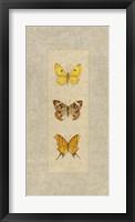 Butterfly Trio I Framed Print