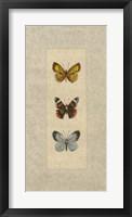 Framed Butterfly Trio II