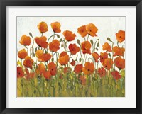 Framed Rows of Poppies I