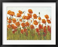 Rows of Poppies II Framed Print