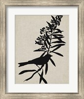 Framed Audubon Silhouette I