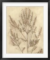 Gilded Foliage II Framed Print