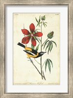 Framed Audubon Bird & Botanical I