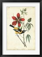 Framed Audubon Bird & Botanical I
