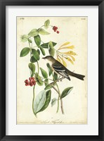 Framed Audubon Bird & Botanical II