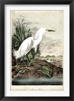 Framed Snowy Heron