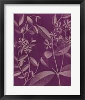 Framed Modern Botany III