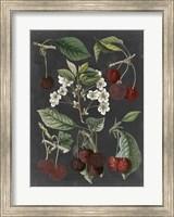 Framed Orchard Varieties I