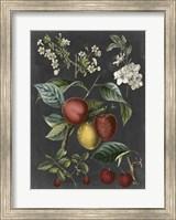 Framed Orchard Varieties III