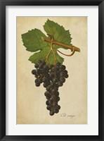 Vintage Vines IV Framed Print