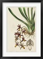 Framed Spring Orchid V