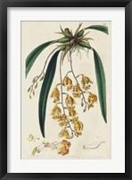 Framed Spring Orchid VI