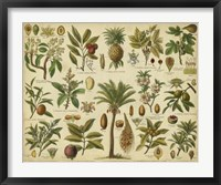 Framed Classification of Tropical Plants
