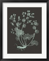 Framed Mint & Charcoal Nature Study I