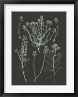 Framed Mint & Charcoal Nature Study III