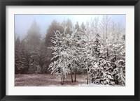 Framed Frosty Morning