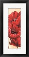 Framed Red Poppy III