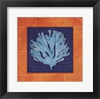 Framed Seaweed