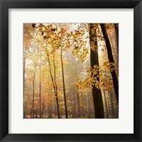 Framed Autumn Blush