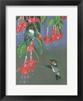 Framed Hummers & Fuchsia