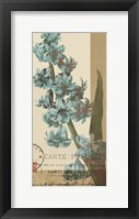 French Blue III Framed Print