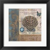 Botticelli Shell I Framed Print