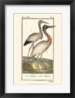 Framed Buffon Cranes & Herons I