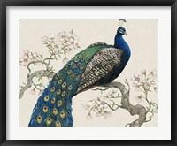 Framed Peacock & Blossoms I