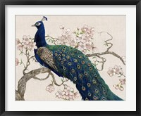 Framed Peacock & Blossoms II