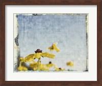 Framed Blackeyed Susans I