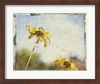 Framed Blackeyed Susans II