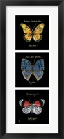 Primary Butterfly Panel II Framed Print