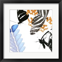 Butterfly Inflorescence II Framed Print