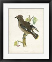 Framed Waxwing