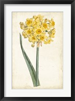 Framed Curtis Narcissus I
