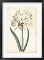 Framed Curtis Narcissus II