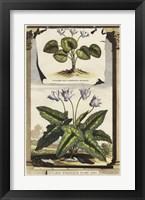 Framed Cyclamen Flore I