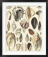 Framed Seashell Display