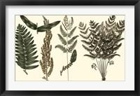 Framed Fern Leaf Folio I