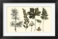 Framed Fern Leaf Folio II