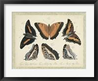 Bookplate Butterflies Trio I Framed Print