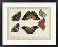 Bookplate Butterflies Trio II Framed Print
