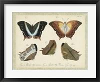 Bookplate Butterflies Trio III Framed Print