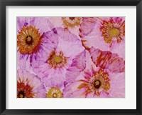 Crepe Paper Flowers I Framed Print
